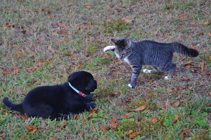 Shasta and Benji